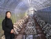 mushroom cultivation in technopark. Black Bedroom Furniture Sets. Home Design Ideas